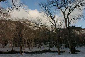 静かな朝の林道