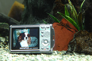 勿論水中で撮影可能