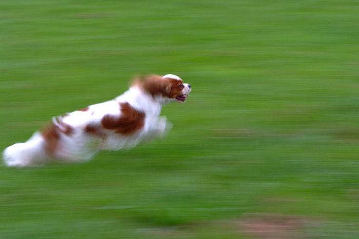 バロン走る