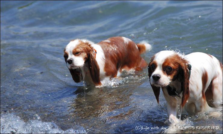 泳いできたよ。