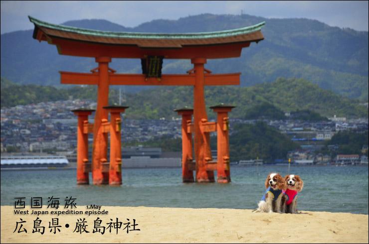 バロン&アイリ厳島神社へ