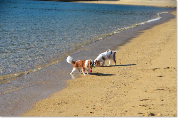 砂浜で遊ぶ
