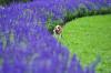 花に囲まれ